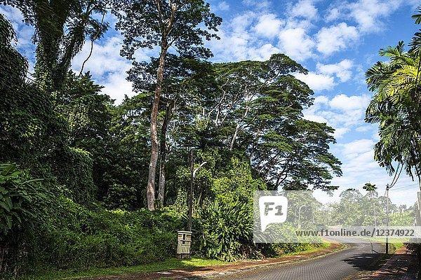 Trees at Reservoir Park  Kuching  Sarawak  Malaysia