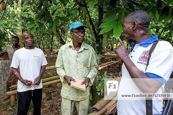 Cocoa farmers' cooperative members.
