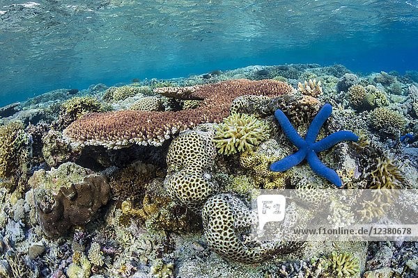 A profusion of hard and soft corals on Sebayur Island  Komodo National Park  Flores Sea  Indonesia.