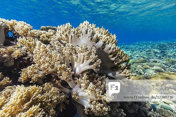A profusion of hard and soft corals on Siaba Kecil Island  Komodo National Park  Flores Sea  Indonesia.