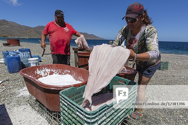 Local shark fisherman cleaning and salting their catch on Belcher Point  Magdalena Island  BCS  Mexico.