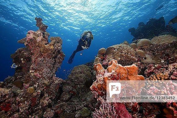 Weibliche Taucherin schwimmt neben Korallenriff  Fuvahmulah Insel  Indischer Ozean  Malediven  Asien