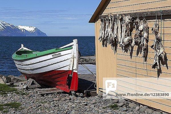 Fischerhütte mit Trockenfisch  Boot und Meer  Grenivik  Nordisland  Island  Europa
