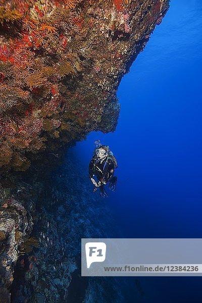 Weibliche Taucherinnen schwimmt an einer mit Korallen bedeckten Wand  Fuvahmulah Insel  Indischer Ozean  Malediven  Asien
