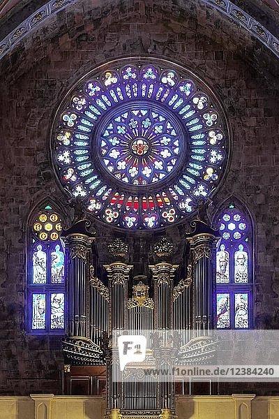 Orgelempore mit Fensterrose  Rosette  Innenraum  Kirche St. Bartholomäus  römisch-katholische Pfarrkirche  Plaza de sa Constitucio  Sóller  Serra de Tramuntana  Mallorca  Balearen  Spanien  Europa
