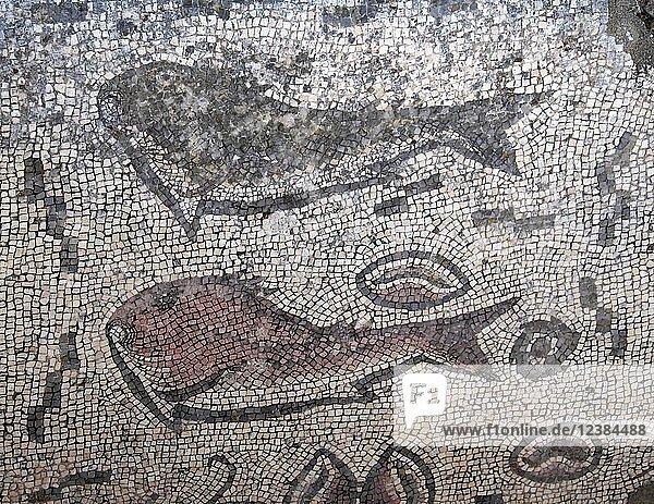 Mosaik mit Fischfigur  Ruinen von Milreu  Estoi  Algarve  Portugal  Europa