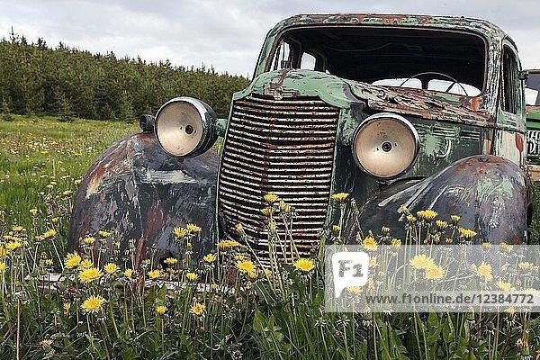 Oldtimer  Schrottauto  Vauxhalll  1940er Jahre  Autofriedhof am Ystafell Transportation Museum  Samgönguminjasafnið Ystafelli  Nordisland  Island  Europa