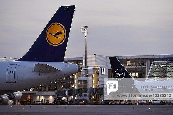 Lufthansa  Airbus  A321-100  New Livery  altes und neues Lufthansa Design  in der Abenddämmerung  vor Terminal 2  Flughafen München  Oberbayern  Bayern  Deutschland  Europa
