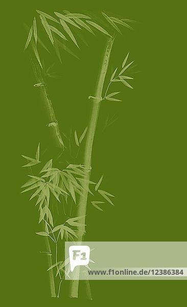 Künstlerisches Design in japanischer Zen-Tuschezeichnung mit Bambusstiel und jungen Blättern  Illustration