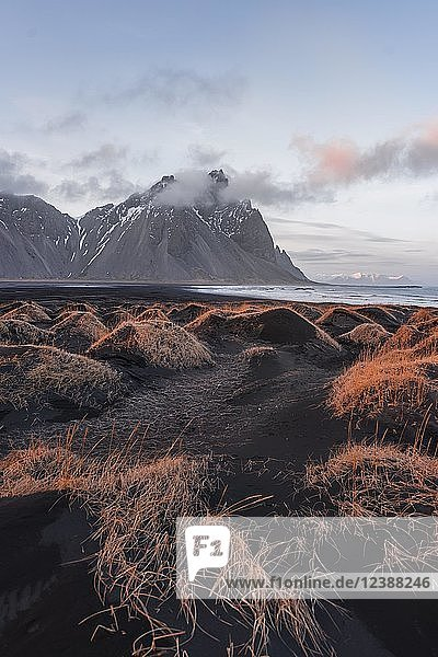 Evening atmosphere  Black sand beach  dunes with dry grass  mountains Klifatindur  Eystrahorn and Kambhorn  headland Stokksnes  massif Klifatindur  Austurland  East Iceland  Iceland  Europe