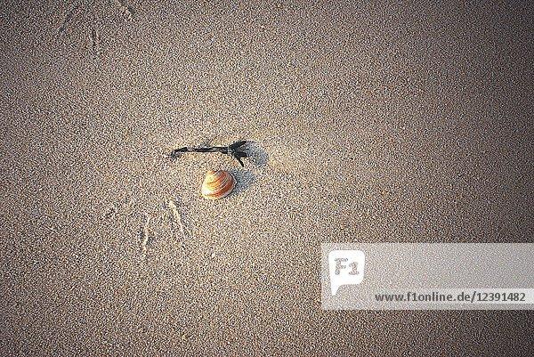 Muschel am Strand von Norderney