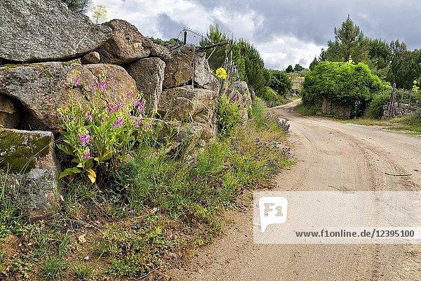 Navaluenga road in La Rincnada. Avila. Spain