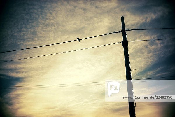 Electricity Pylon and power lines at sunrise. Mahon  Menorca  Baleares Spain.