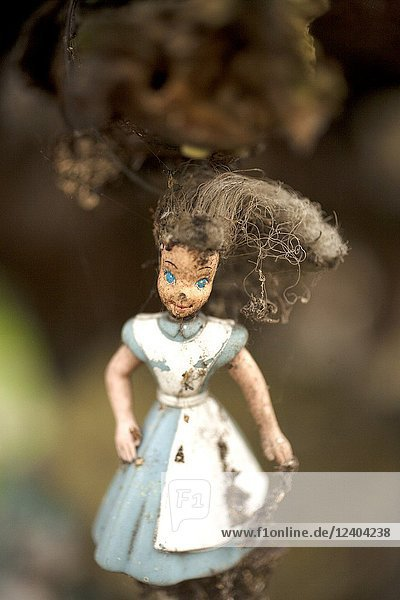 A doll from the film Alice in Wonderland hangs on a tree on the Island of the Dolls in Xochimilco  southern Mexico City. The late Don Julian turned his 'chinampa ' a small artificial island where he grew food  into what is now known as the Island of the Dolls  as he hung dolls found floating around his home to scare away the ghost of a child who had drowned. Today visitors can tour the island as it is maintained by on of his nephews.
