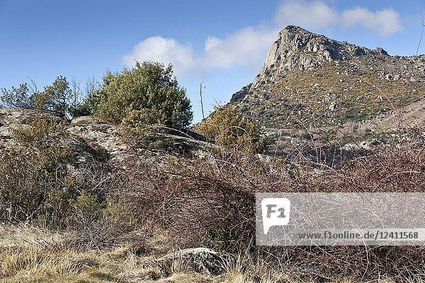 The Honey Peak in the Sierra de la Cabrera. Madrid. Spain.
