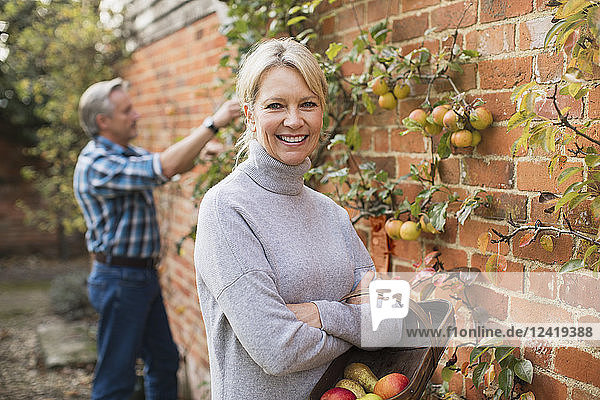 Portrait smiling,  confident mature woman harvesting apples in garden