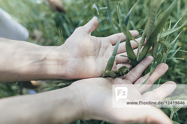 Hands of man in field