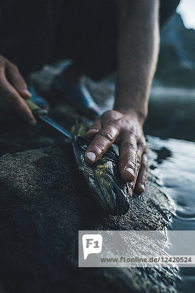 Norway  Lofoten  Moskenesoy  Young man cleaning freshly caught fish