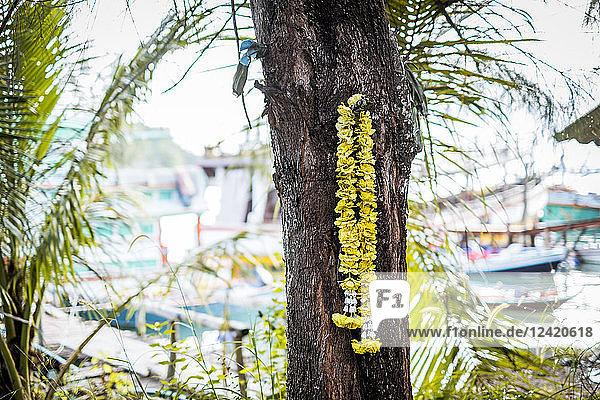 Thailand  Koh Phangan  yellow flower garland hanging at tree trunk