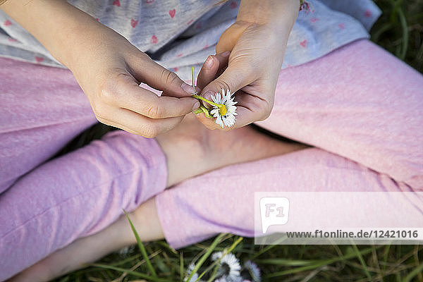 Hands of l ittle girl sitting on a meadow holding daisy  close-up
