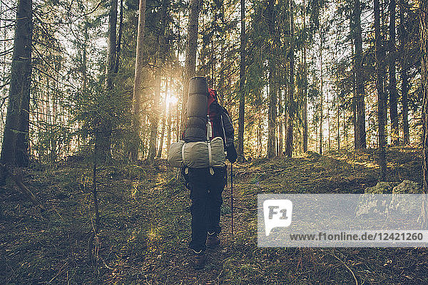 Sweden  Sodermanland  backpacker hiking in remote forest in backlight