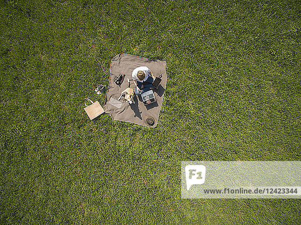 Bird's eye view of woman sitting on blanket on meadow with dog using laptop and tablet