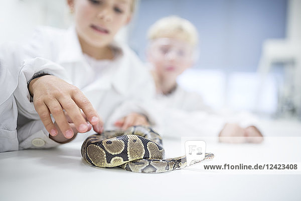 Pupils in science class examining snake