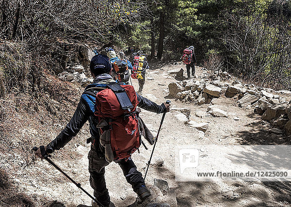 Nepal  Solo Khumbu  Everest  Sagamartha National Park  Mountaineers walking on dirt track