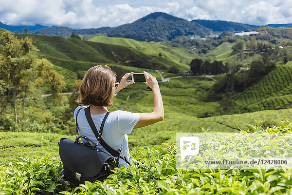 Rear view waist up shot of female tourist taking picture of tea plantations with smartphone  Cameron Highlands  Malaysia