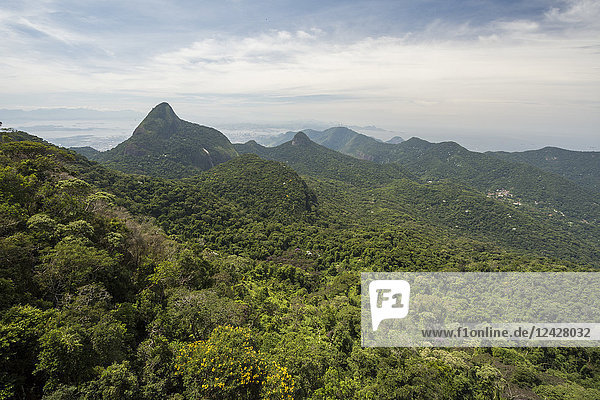 Beautiful natural scenery of forest and mountains  Tijuca Forest National Park  Rio de Janeiro  Brazil