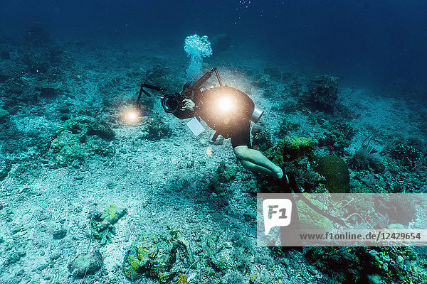 Full length shot of scuba diver filming with movie camera in Tubbataha Reef  Cagayancillo  Philippines