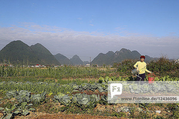 Farmer watering vegetable in the field  Bac Son  Vietnam  Indochina  Southeast Asia  Asia