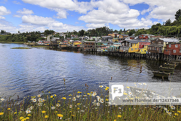 Palafitos  colourful stilt houses on water's edge  unique to Chiloe  with wild flowers  Castro  Isla Grande de Chiloe  Chile  South America
