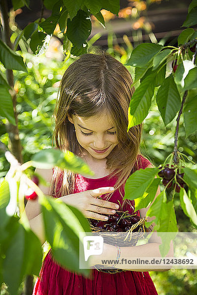 Portrait of little girl with basket full of cherries
