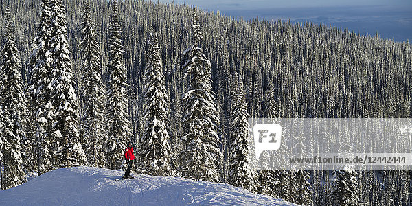 Skier Skier standing with a vast forest behind him  Sun Peaks Resort; Kamloops  British Columbia  Canada