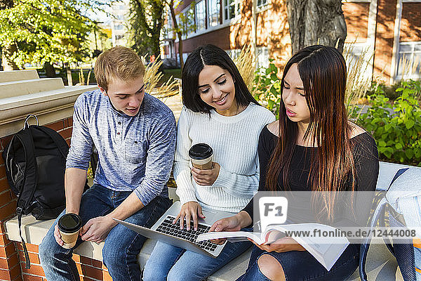 Three young university students sit on a bench with an open laptop while looking at a textbook and working together on schoolwork  Edmonton  Alberta  Canada