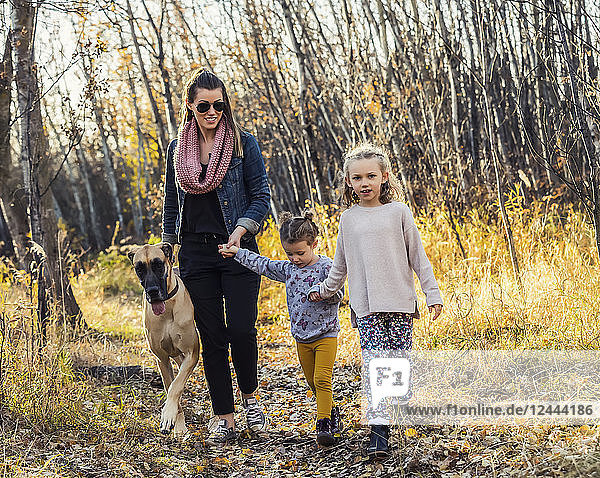 A beautiful mom and her two little daughers walking their Great Dane through the woods in a city park on a warm fall evening; Edmonton  Alberta  Canada
