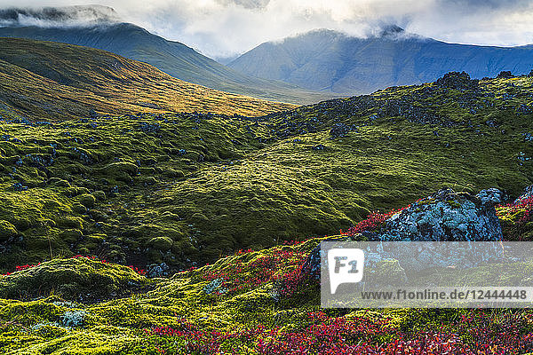 Beautiful colour on the mossy lava fields on the Snaefellsness Peninsula  Iceland