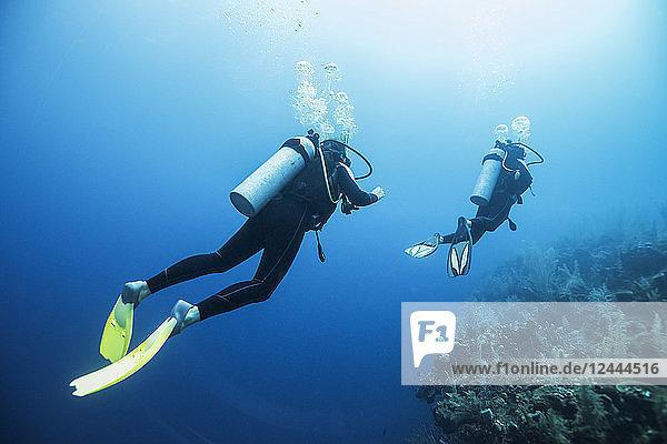 Scuba divers at Secret Spot Dive Site  Belize Barrier Reef  Belize