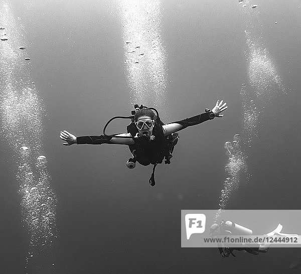 Scuba divers at the Three Amigos Dive Site  Belize Barrier Reef  Belize