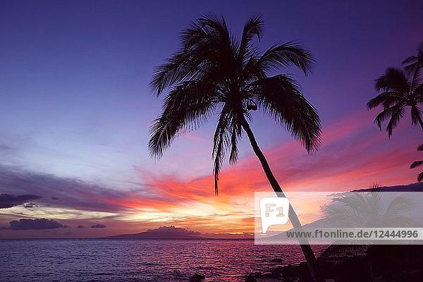 Palme bei Sonnenuntergang  Wailea  Maui  Hawaii  Vereinigte Staaten von Amerika