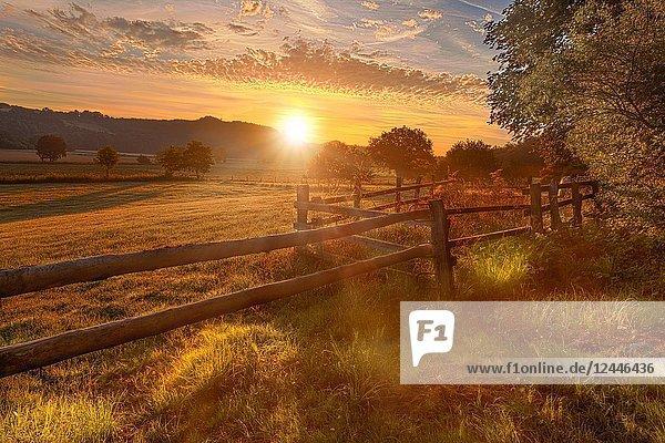 Sun rising over meadow  backlit  Sauerland  Möhnetal  Belecke  Germany.