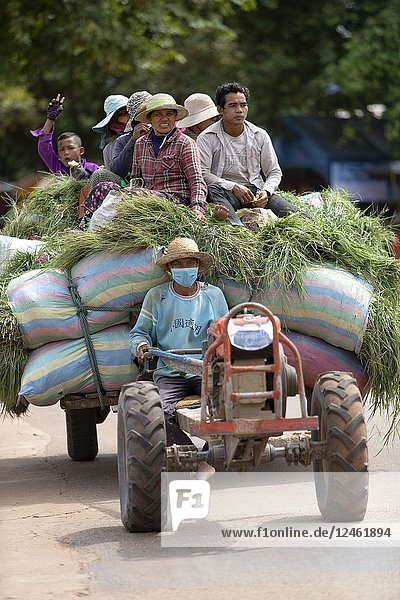 Camp workers on grass bags  Angkor  Siem reap Province  Kingdon of Cambodia.