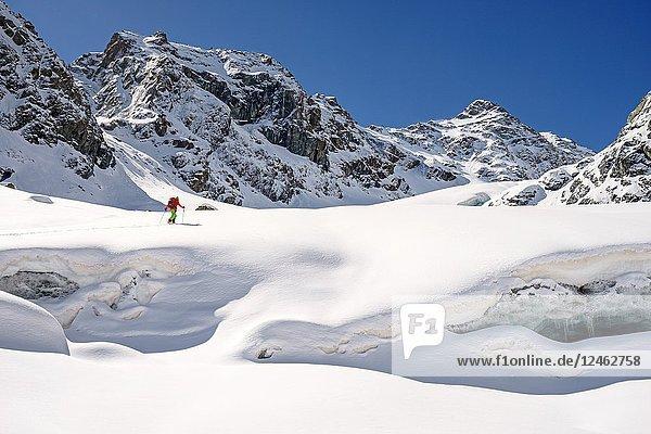 Skitouring to Mount Disgrazia  Ventina Glacier  Chiareggio  Province of Sondrio  Lombardy  Italy.