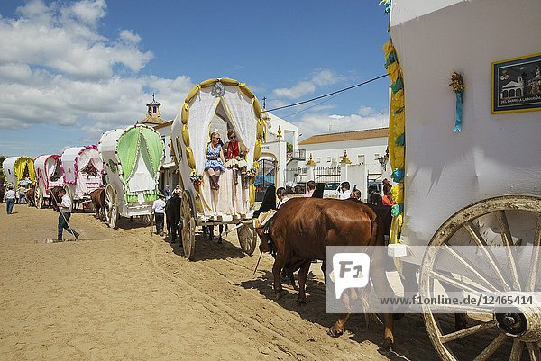 During a famous Pentecost pilgrimage the village of El Rocio converts into a colourful spectacle with beautifully decorated ox-carts  dressed up men and women wearing beautifully coloured gypsy dresses. Huelva province  Andalusia  Spain.
