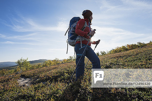 Female hiker hiking through autumn landscape south of Saltoluokta Fj?§llstation  Kungsleden trail  Lapland  Sweden
