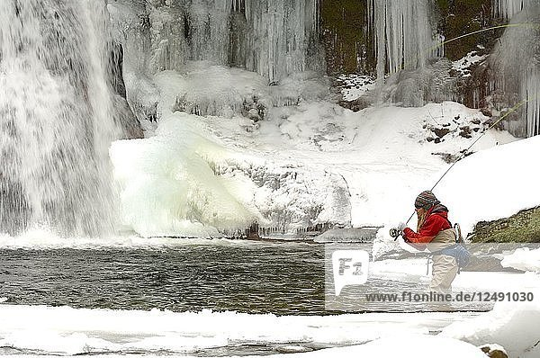 A young woman fly fishing on a snowy  cold  winter day. She is fishing the headwaters of a creek with a waterfall where icicles have formed.