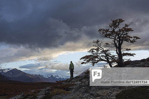 Male photographer  holding a camera in his right hand  looking contemplatively into distance in a pristine and wild landscape. He's looking towards a mountain range with storm clouds above his head. On his right  closer to the camera  there is a lenga beech tree.