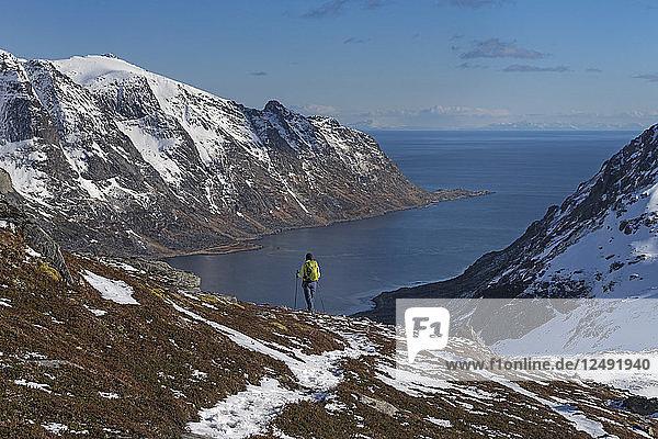 Female Hiker Descending Rocky Ridge Towards Skjelfjorden In Lofoten Islands  Norway
