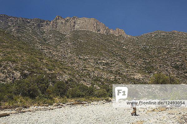 Older Gentleman Hiking Across A Dry Sand Near Mckittrick Canyon